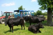 Hall Farm Park, South Kelsey, Lincolnshire