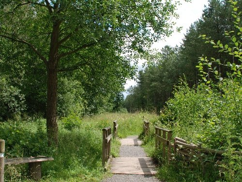 Chambers Farm Woods Wragby Lincolnshire