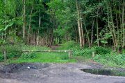 Stapleford Woods, Stapleford, Lincolnshire