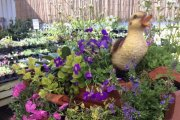 Crowders Garden Centre, Horncastle, Lincolnshire