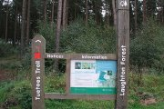 Tuetoes Woods, Gainsborough, Lincolnshire