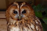 Baytree Owl And Wildlife Centre, Spalding, Lincolnshire