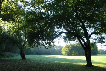 Weelsby Woods, Grimsby, Lincolnshire
