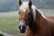 Becks Lane Equestrian Centre, Scotter, Lincolnshire