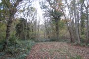 Legbourne Wood, Legbourne, Lincolnshire
