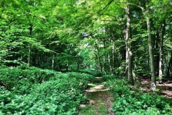 Tunman Woods, Lincoln, Lincolnshire
