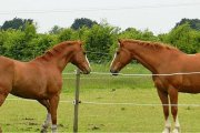 Savannah Equestrian Centre, Boston, Lincolnshire