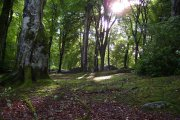 The Boston Woods Trust, Boston, Lincolnshire