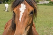 Laughton Wood Equestrian Centre, Laceby, Lincolnshire