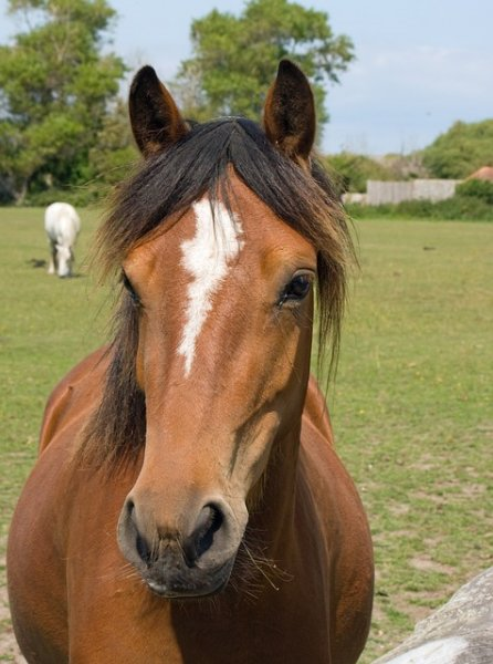 Laughton Wood Equestrian Centre Laceby Lincolnshire