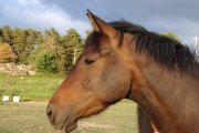 The Paddocks Riding Centre, Hough-on-the-Hill, Lincolnshire