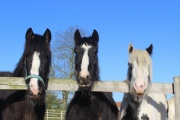 Bransby Horses – Rescue and Welfare, Lincoln, Lincolnshire