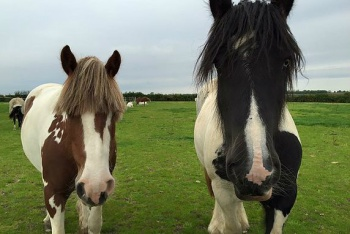 Uffington Riding Stables, Ryhall, Lincolnshire