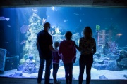 Skegness Aquarium, Skegness, Lincolnshire
