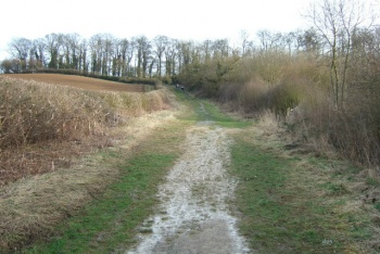 Londonthorpe Woods, Grantham, Lincolnshire