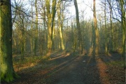 Brumby Wood Local Nature Reserve, Scunthorpe, Lincolnshire