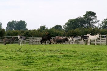 Radcliffe Donkey Sanctuary, Huttoft, Lincolnshire