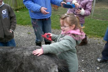 Stickney Farm Park, Stickney, Lincolnshire